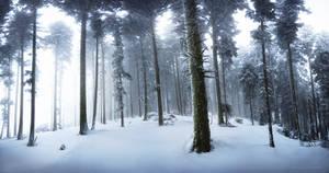 Step in Winter