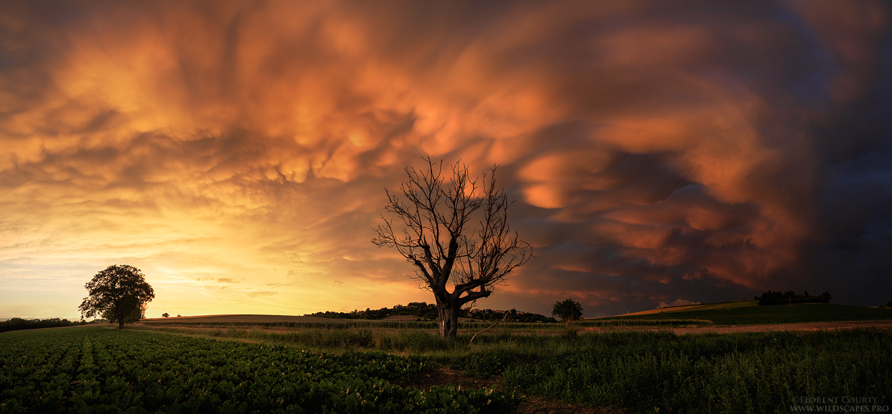 Blazing Mammatus by FlorentCourty