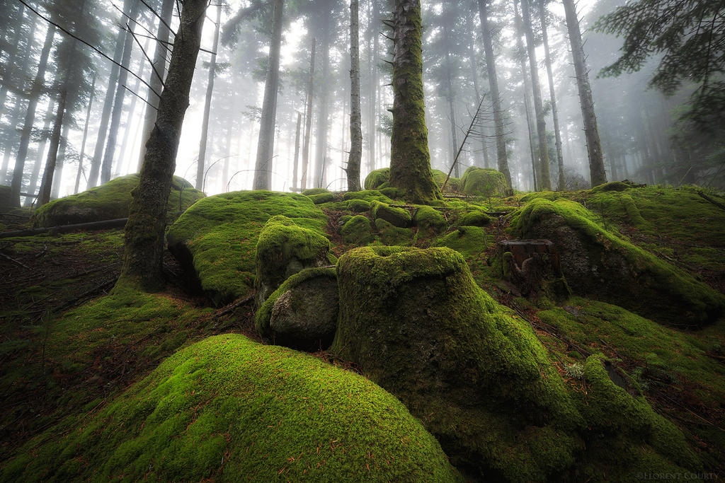 Moss Blanket by FlorentCourty