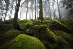 Moss Blanket