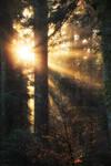 Light my Forest