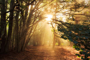 Light Breath by FlorentCourty