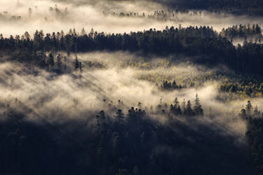 Shadow of the Forest by FlorentCourty
