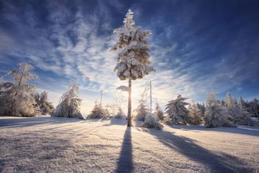 Winter Shine by FlorentCourty