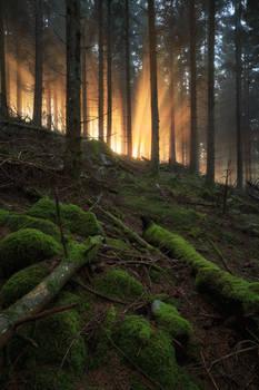 Light magic by FlorentCourty