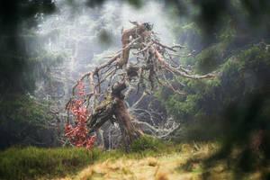 Dead Tree King