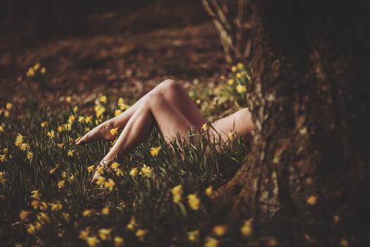 Daffodils Undressed