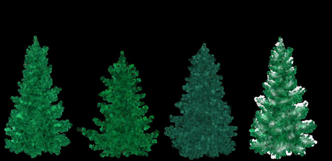Decorating Cedar Trees For Christmas