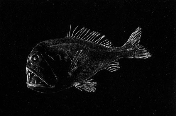 scratchboard fish Gallery