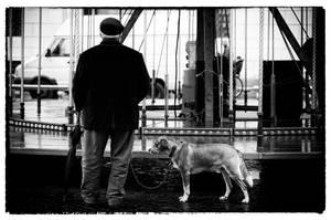 Piazza Navona, Carosello con uomo anziano e cane.