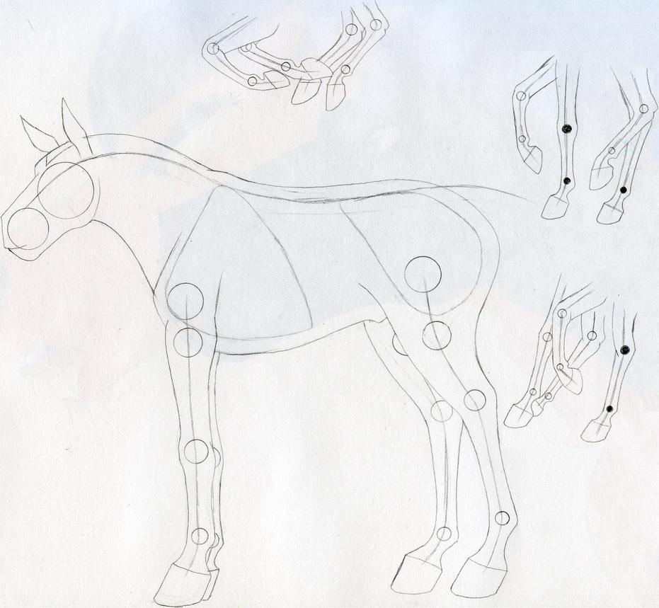 Horse Anatomy by spiritvegeta on DeviantArt