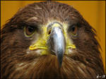 Eagle: Don't look at me...
