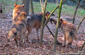 Wolves... omg, or birds?? by Allerlei
