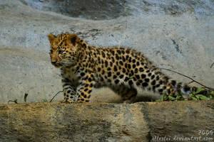 Curious amur leopard baby by Allerlei