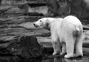 Polar bear: Flocke by Allerlei