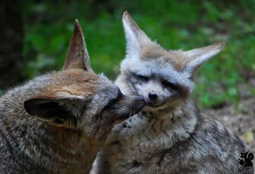 Kiss as goodbye by Allerlei