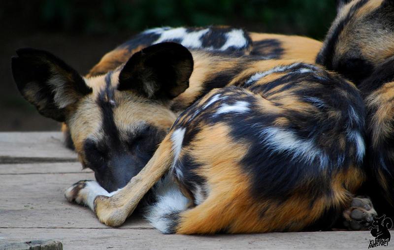 Huddling dog by Allerlei