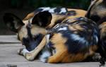 Huddling dog