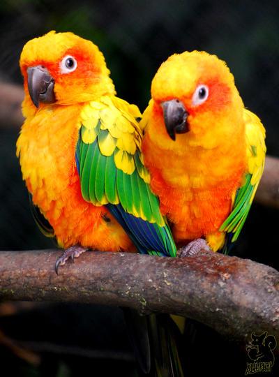 Golden couple by Allerlei
