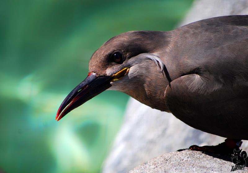 Sweet beak