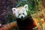 Pandaaaaa is hungry