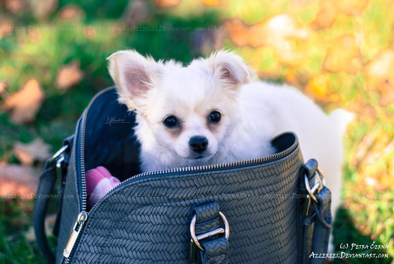 My owner's bag, my castle by Allerlei