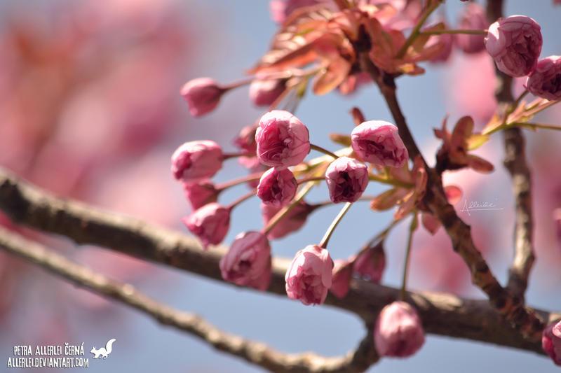 Pink by Allerlei