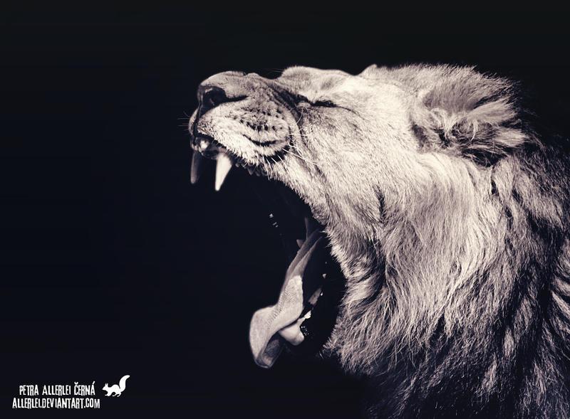 Roar or yawn? by Allerlei