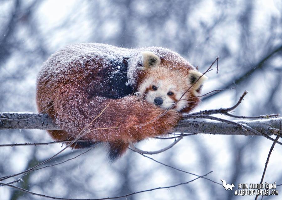 Snowing by Allerlei