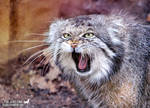 One angry kitty