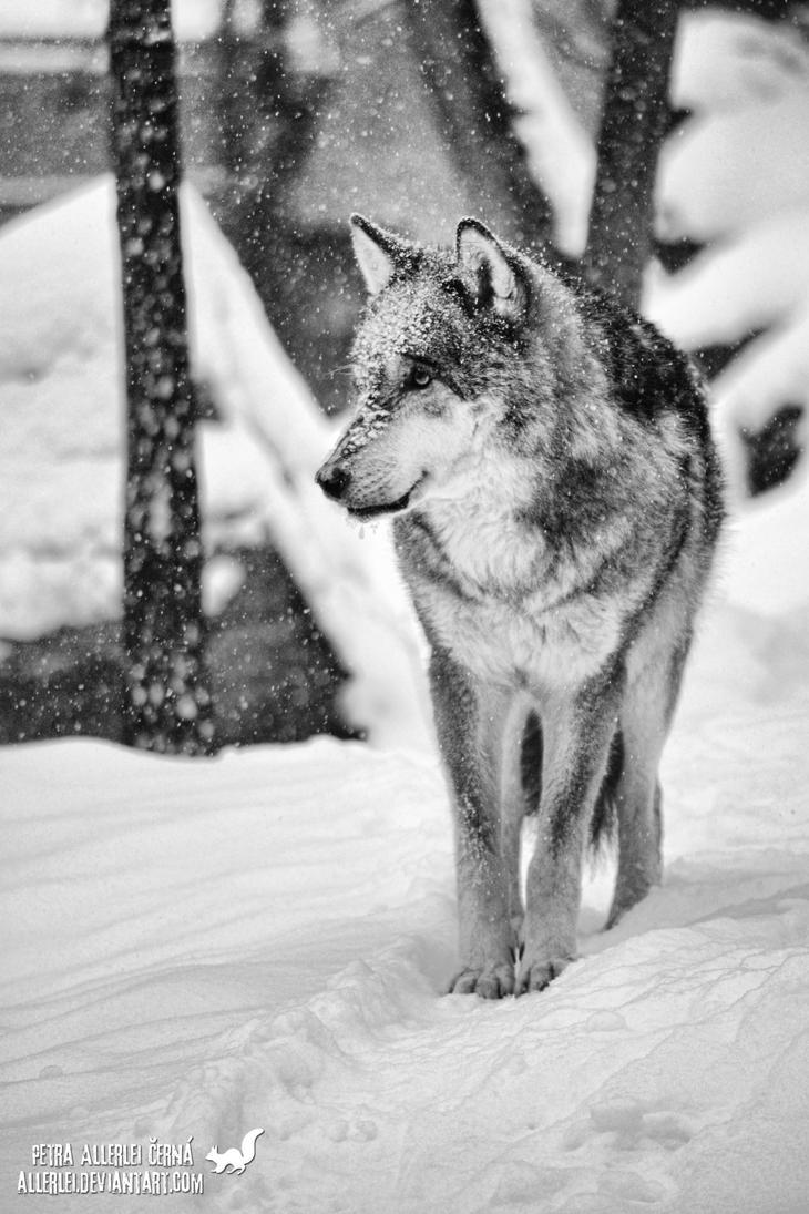 Remembering Snow by Allerlei