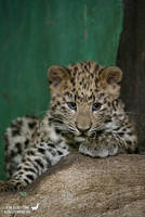 Endangered baby by Allerlei