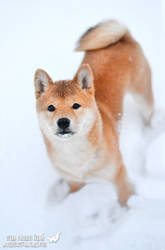 Sachi and her first snow