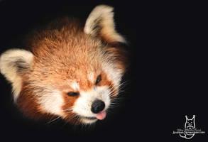 Panda in the darkness by Allerlei