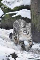 On a snowy walk