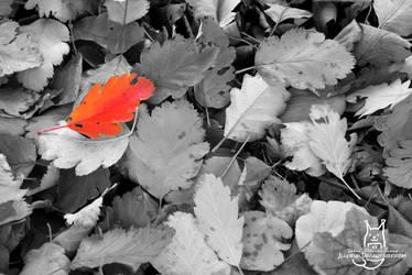 A Red Leaf by Allerlei