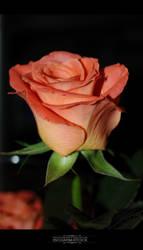 ischarm_flowerstock_022