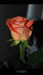 ischarm_flowerstock_023