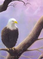 Eagle sights by clarkspark