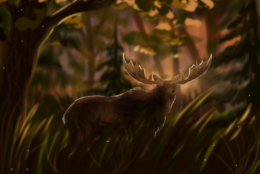 Forest animal