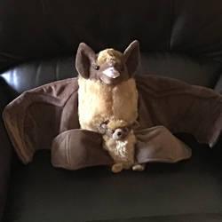 Batty senior and Batty junior