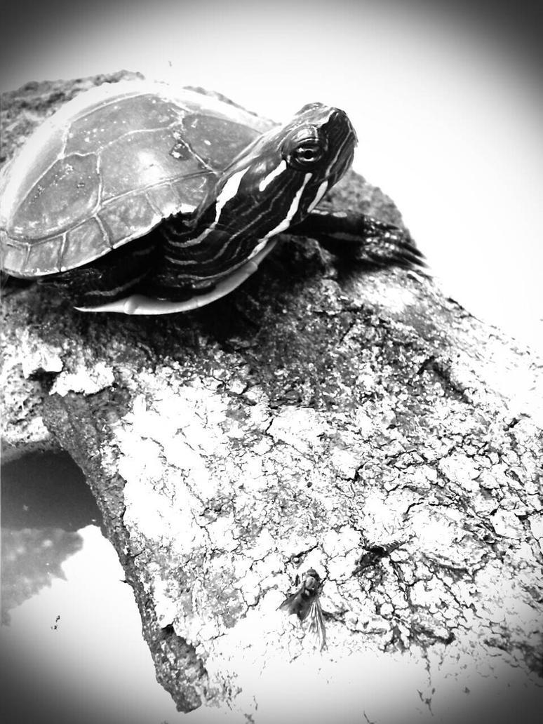 turtle by autobutt
