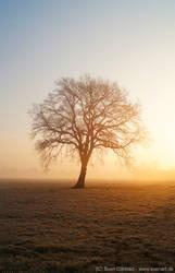 Morning Tree by svenart