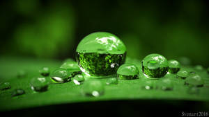 Waterdrops closeup by svenart