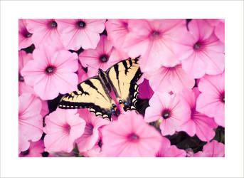 butterfly. by aprylle0497