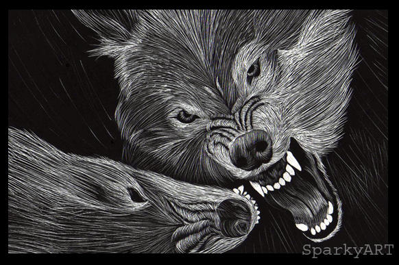 Wolves Fighting by Spa...