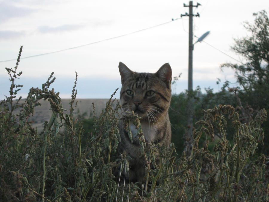 Nice cat by 2Mpxl