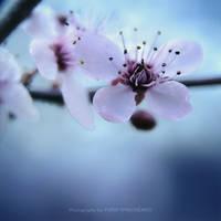 Spring in a square 01 by dizzi-bizzi