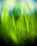 Grass by dizzi-bizzi