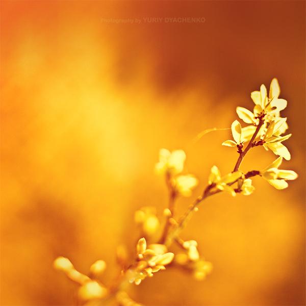 Colour of spring 3 by dizzi-bizzi